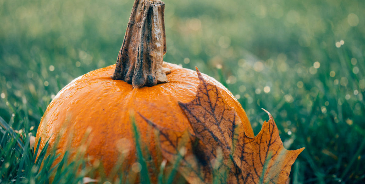 The Eye Health Benefits Of Eating Pumpkin